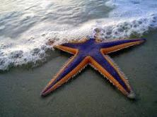 starfish3one